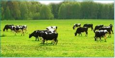 Agricalture
